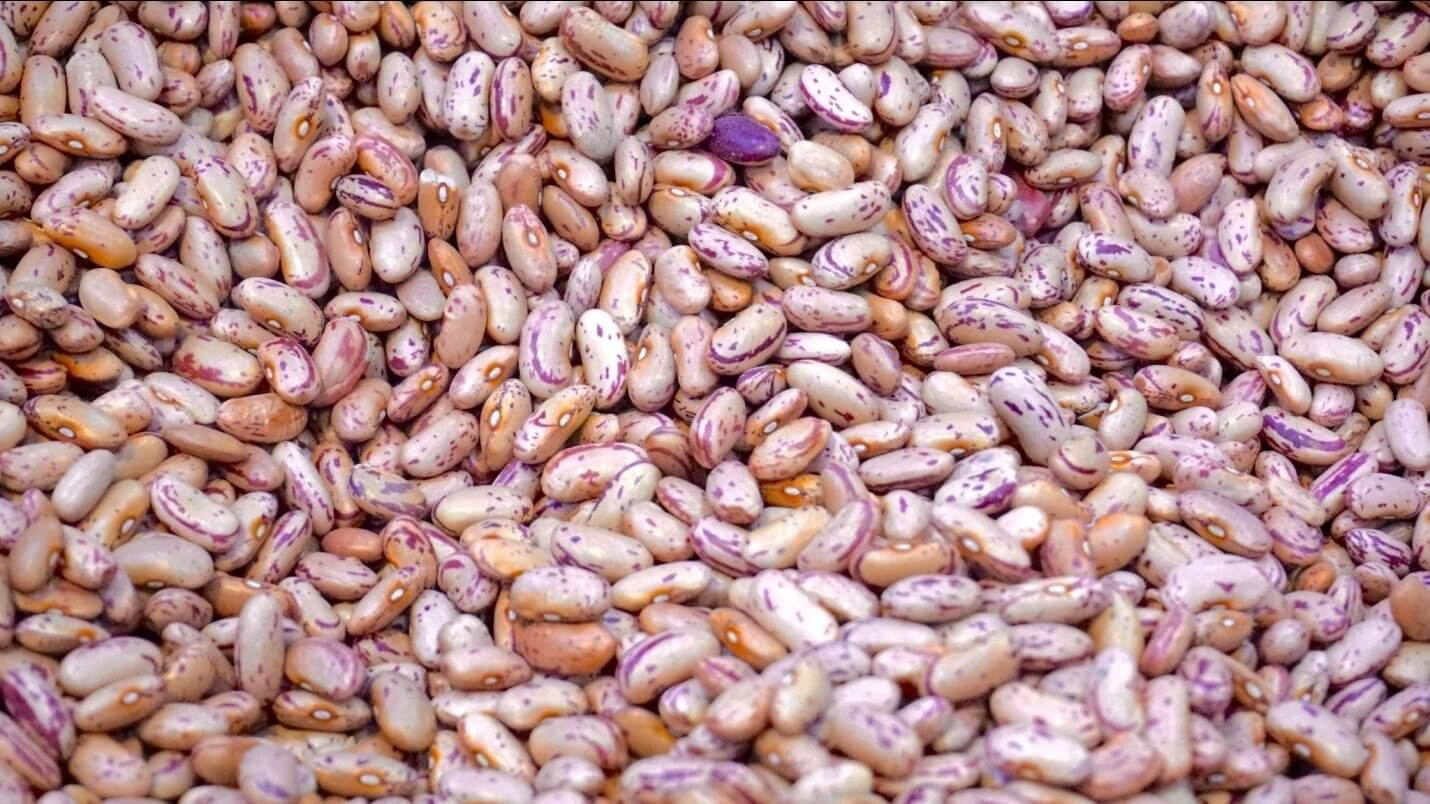 agriculture-beans-close-up-176169.jpg