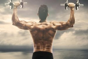 A Guide to Muscle Building